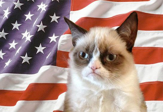 Grumpy Cat Gif Tumblr