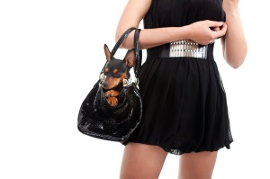 woman with dog in bag, trendy lifestyle, isolated on white background