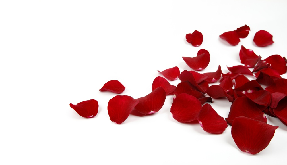Ptales de Rose