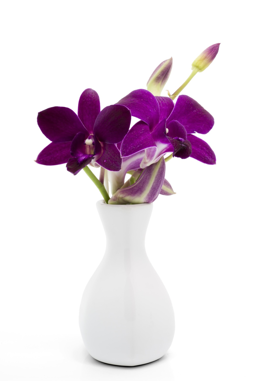 Blossom purple orchid in white vase